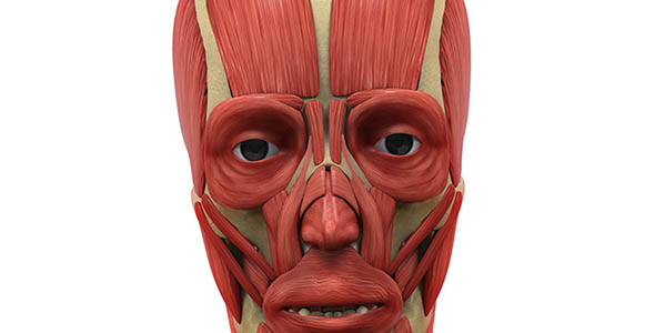 human-facial-muscles-anatomy-isolated-3d