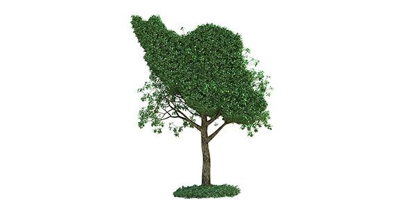 تصویر نقشه ایران و درخت سبز