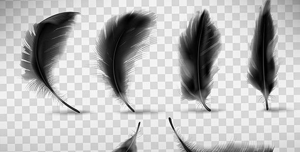 وکتور واقع گرایانه پر سیاه پرنده