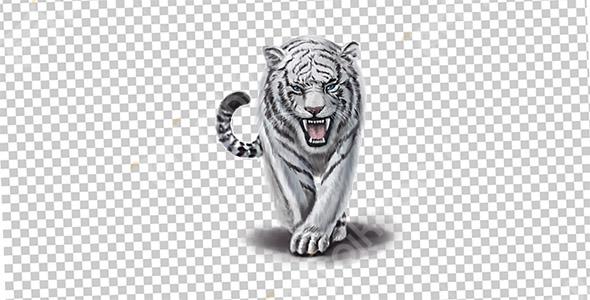 تصویر PNG ببر سفید و حیوان وحشی