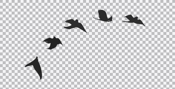 تصویر PNG ضد نور پرندگان