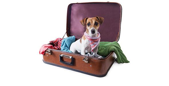 تصویر پس زمینه سگ و چمدان سفر