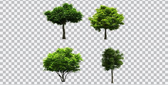 تصویر PNG درخت سبز