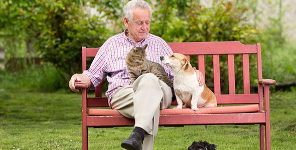 تصویر پیرمرد و استراحت روی نیمکت در پارک