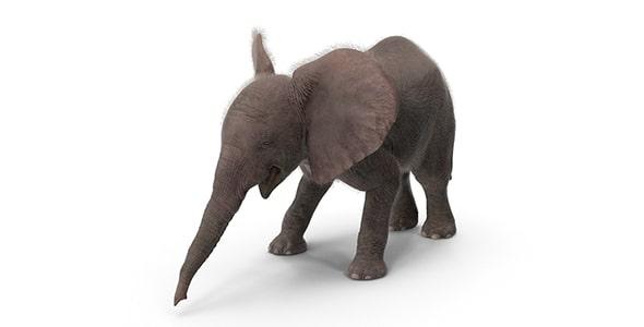 فایل لایه باز آیکون بچه فیل