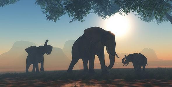تصویر پس زمینه گله فیل