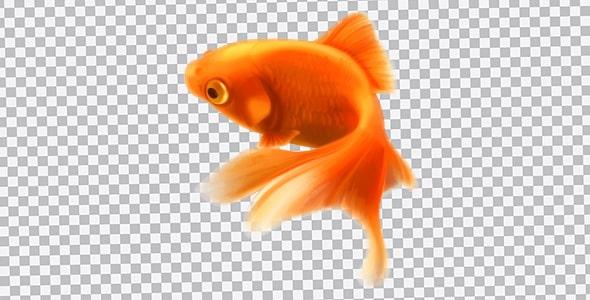 تصویر PNG ماهی قرمز عید