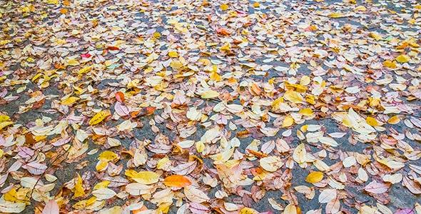 تصویر شاخ و برگ پاییزی و برگ ریزان