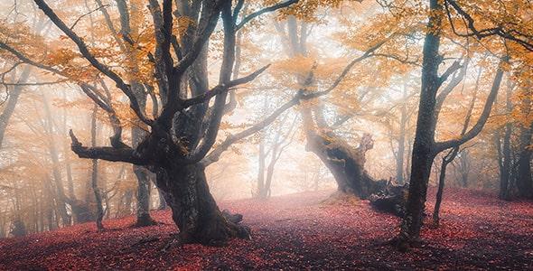 تصویر پس زمینه مه در جنگل پاییزی