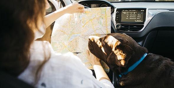 تصویر سگ سیاه و زن در حال نقشه خوانی