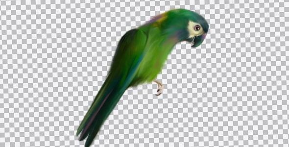 تصویر PNG طوطی سبز