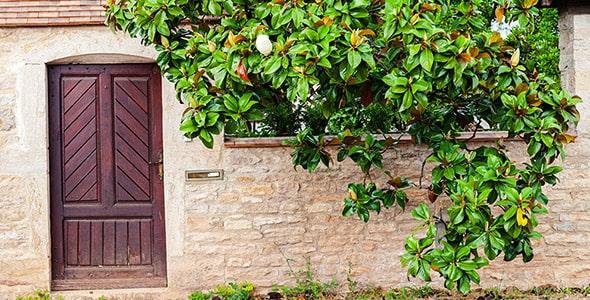 تصویر درب چوبی قدیمی و دیوار باغ