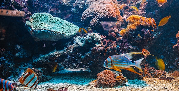 تصویر ماهی های رنگی در آکواریوم آب شور