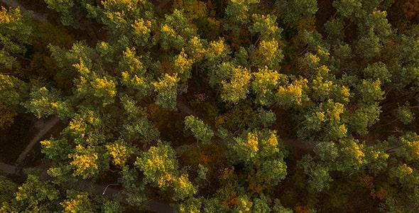 تصویر نمای بالا جنگل در فصل پاییز