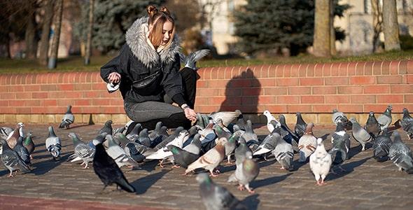تصویر پس زمینه دختر جوان و کبوترها