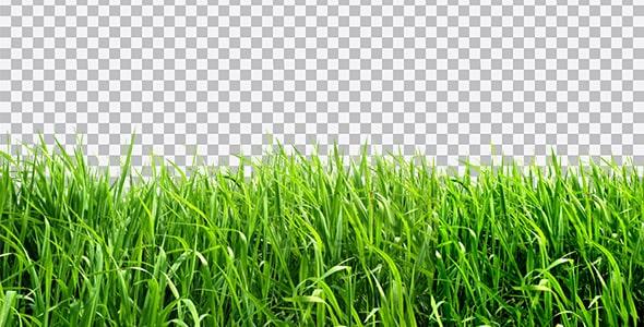 تصویر PNG سبزه و چمن
