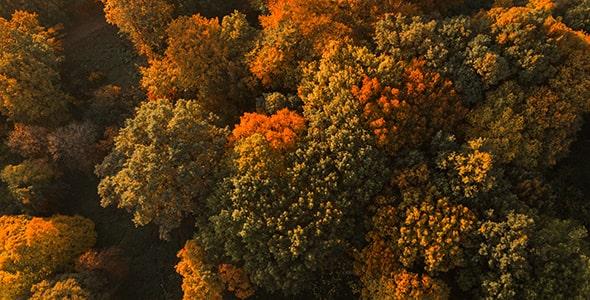 تصویر نمای بالا و پانوراما جنگل در فصل پاییز