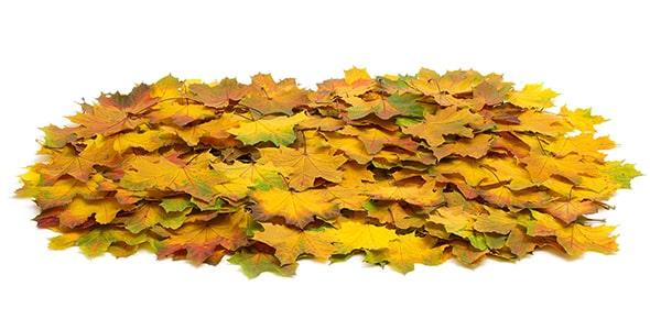 تصویر برگ های پاییزی انباشته شده روی هم
