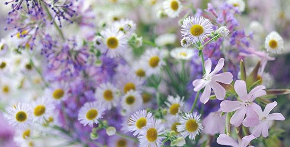 تصویر پس زمینه مجموعه گلهای وحشی