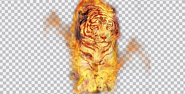 تصویر PNG ببر با شعله های آتش