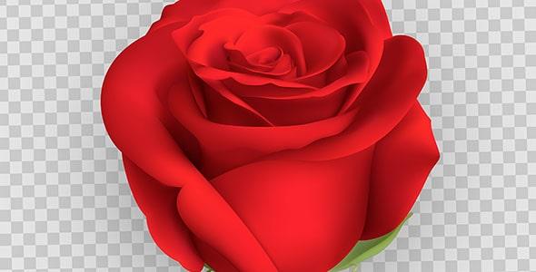 وکتور گل سرخ طراحی واقع گرایانه