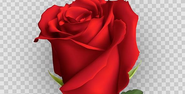 وکتور طراحی واقع گرایانه گل سرخ یا رز