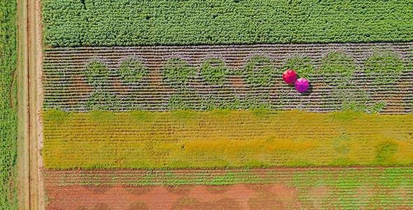 تصویر نمای بالا باغ گل با چتر های رنگی