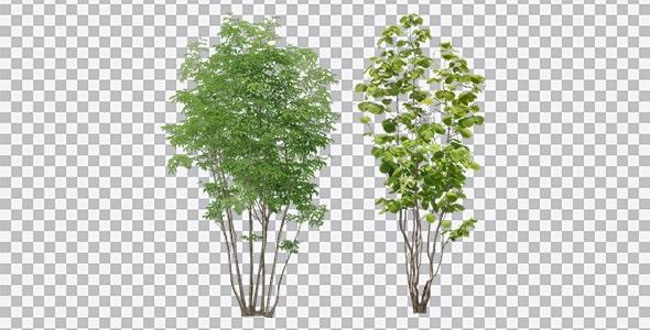 تصویر PNG درختان سبز