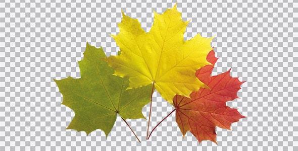 تصویر PNG برگ های پاییزی