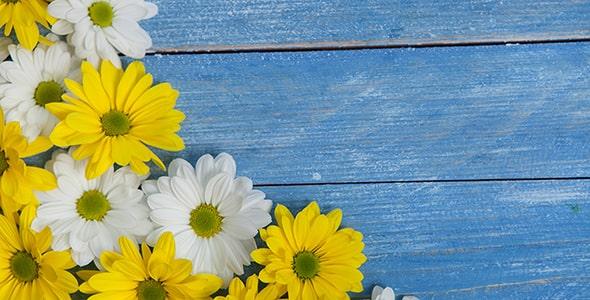 تصویر مجموعه گل داوودی روی میز چوبی