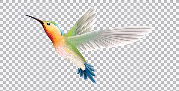 تصویر PNG پرنده مرغ مگس خوار