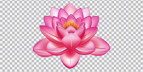تصویر PNG گل لاله تالابی یا لاله مردابی