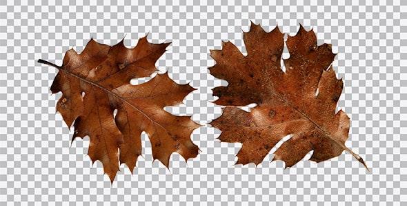 تصویر PNG نمای بالا برگ های پاییزی