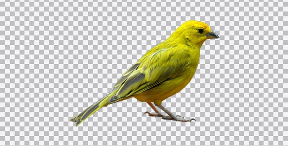 تصویر PNG کلیپ آرت و ترنسپرنت پرنده