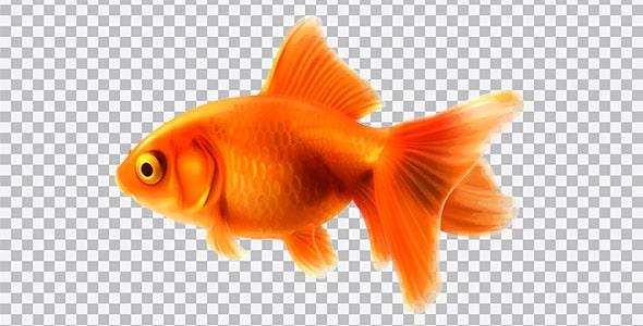 تصویر PNG ماهی قرمز عید نوروز
