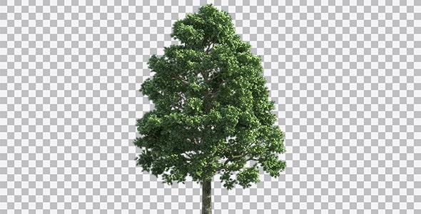 تصویر PNG درخت با شاخ و برگ سبز