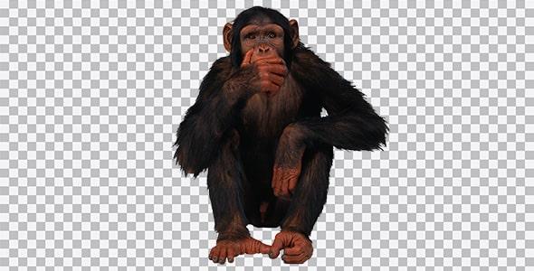 تصویر PNG میمون
