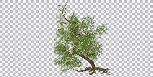 تصویر PNG کلیپ آرت درخت سبز