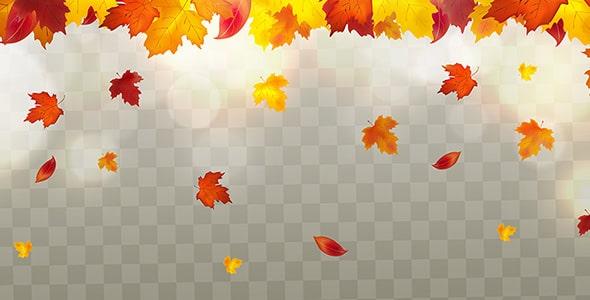 وکتور برگ ریزان فصل پاییز و برگ درخت افرا