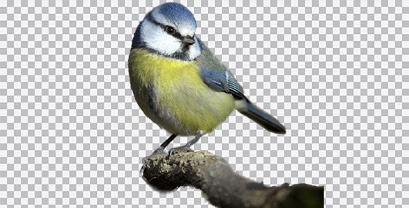 تصویر PNG پرنده نشسته روی شاخه درخت
