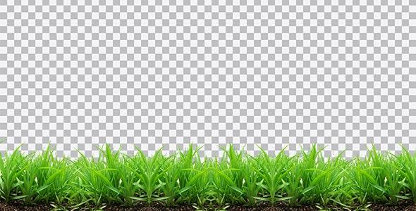 تصویر PNG چمن و سبزه کاشته شده در خاک