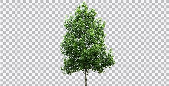 تصویر PNG درخت با تنه بلند
