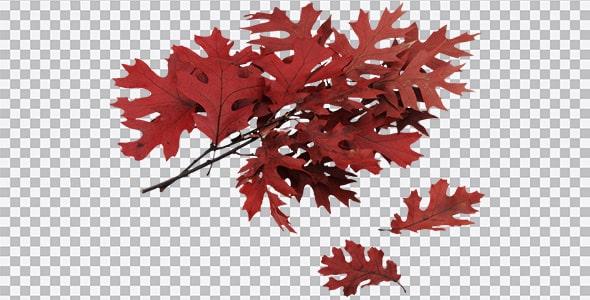 تصویر PNG شاخه درخت و برگ پاییزی