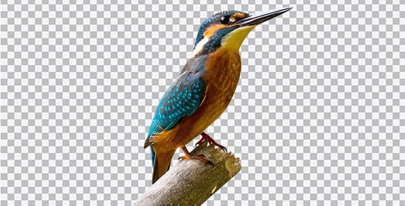 تصویر PNG پرنده ماهی خورک