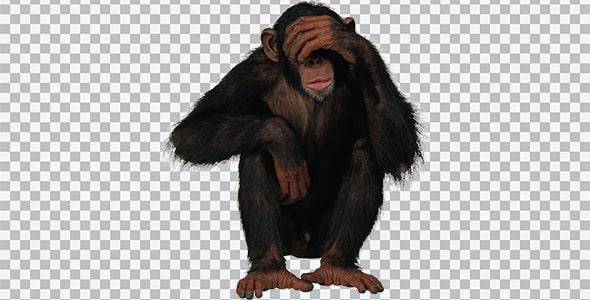 تصویر PNG ترنسپرنت میمون