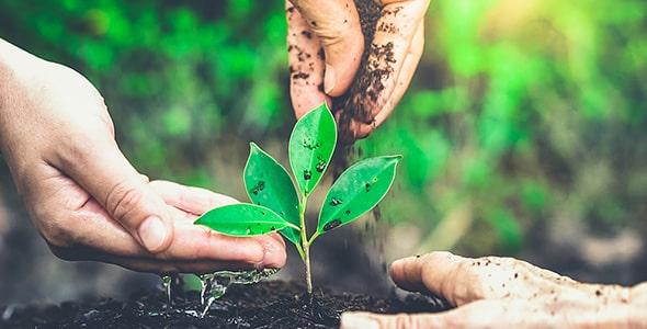 تصویر دست انسان و کاشت گل و گیاه