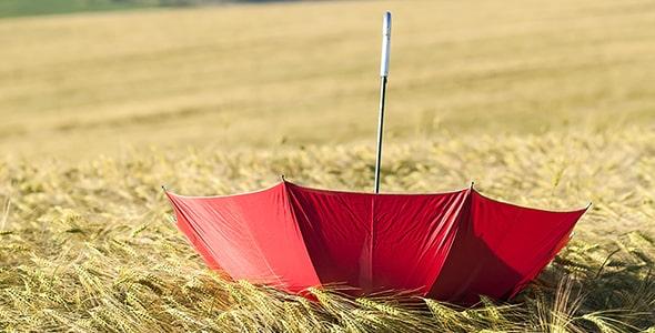 تصویر پس زمینه چتر در مزرعه گندم