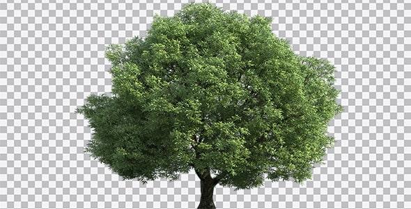 تصویر PNG درخت سرسبز